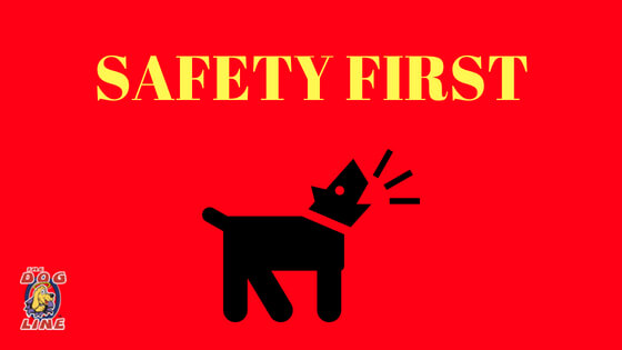 Ensure your pet's safety with PetSafe's Easy Dog Training Collar