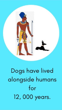Dog Fact # 1: Dogs Have Lived Alongside Humans for 12, 000 Years.