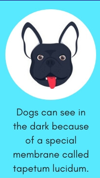 Dog Fact # 4: Dogs Can See in the Dark Because of a Special Membrane Called Tapetum Lucidum.