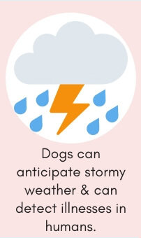 Dog Fact # 6: Dogs Can Anticipate Stormy Weather & Can Detect Illnesses in Humans