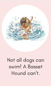 Dog Fact # 7: Not All Dogs Can Swim