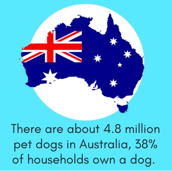 Dog Fact # 9: There are About 4.8 Million Pet Dogs in Australia, 38% of Households Own a Dog
