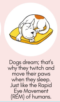 repellant and is a harmless and great deterrent to dogs.  Dog Fact # 13: Dogs Dream; That's Why They Twitch & Move Their Paws When They Sleep.