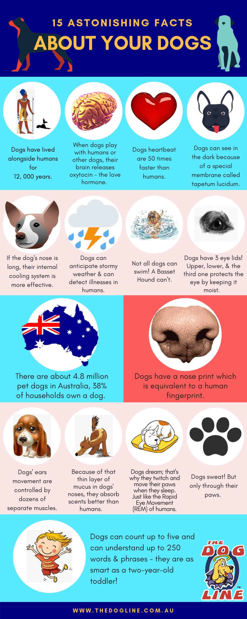 15 Awesome Dog Facts That Will Surprise You