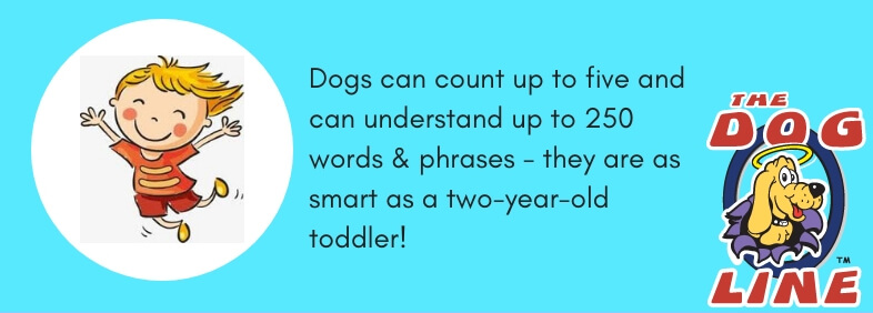 Fact # 15: Dogs Can Count & Can Understand Up to 250 Words & Phrases Just Like a Two-Year-Old Toddler