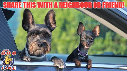Share these 4 easy steps to stop your neighbour's dog from nuisance barking