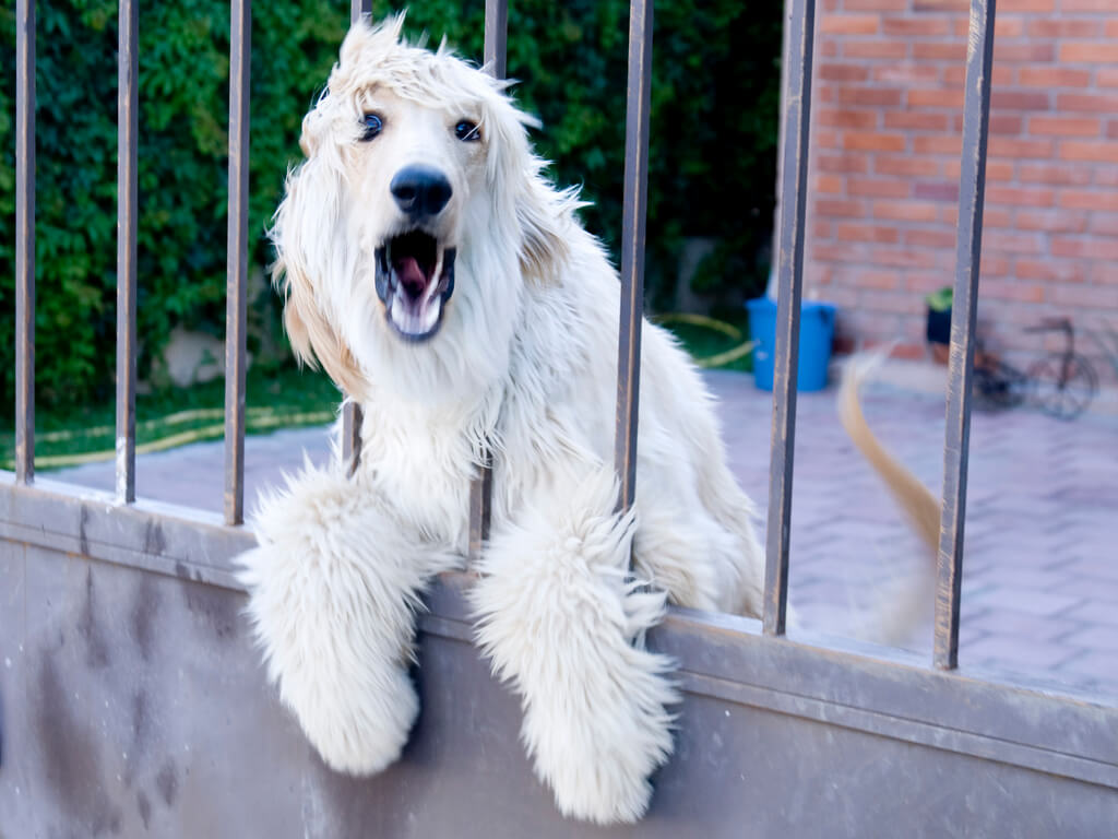 nuisance barking in dogs