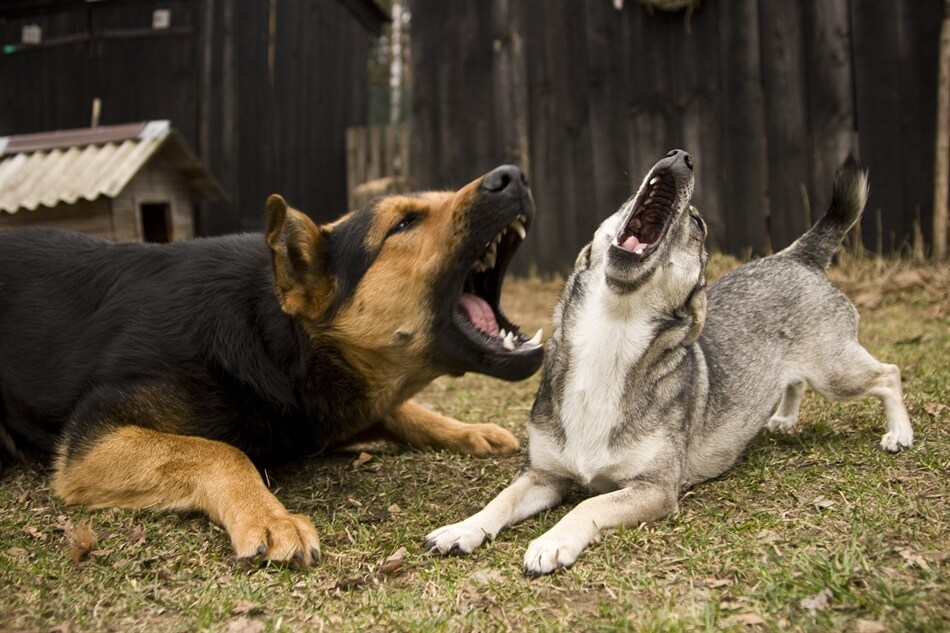 Best Solution For Your Dog S Nuisance Barking