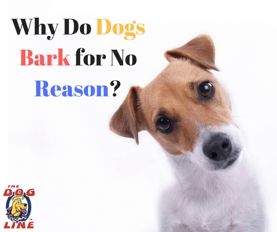 Why do dogs bark for no reasons