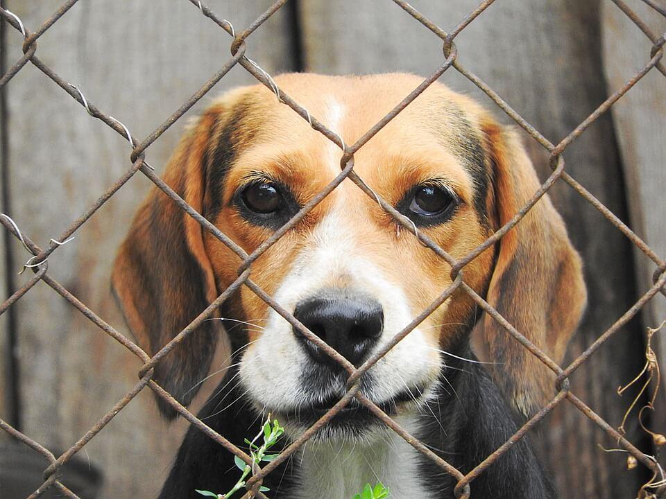 Dog Fence For A Dog Escape Artist