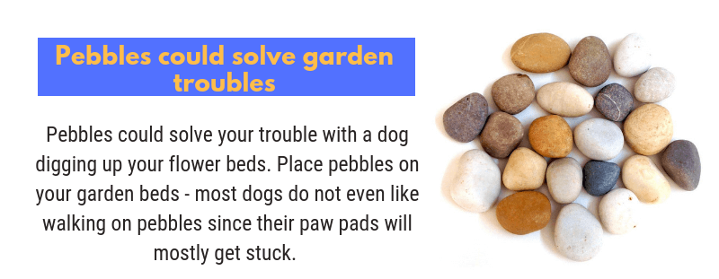 Tip to stop your dogs from digging up your flower beds
