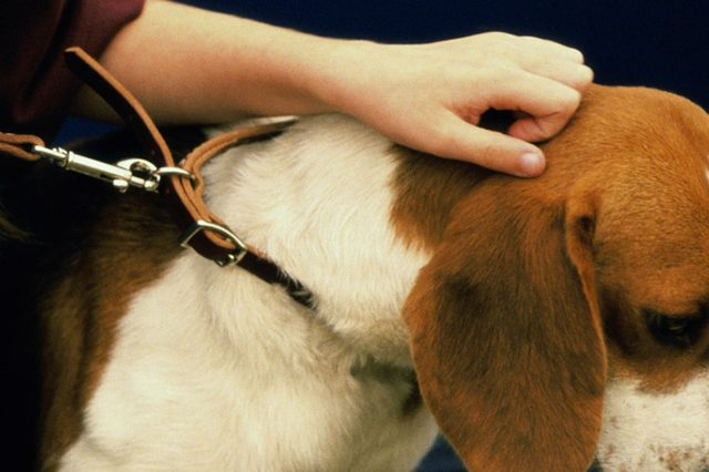 5 Improper Ways of Using Electric Dog Collars That Can Burn Your Dog's Neck and How to Avoid Them