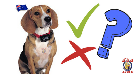 Know these improper ways of using Electric Dog Collars