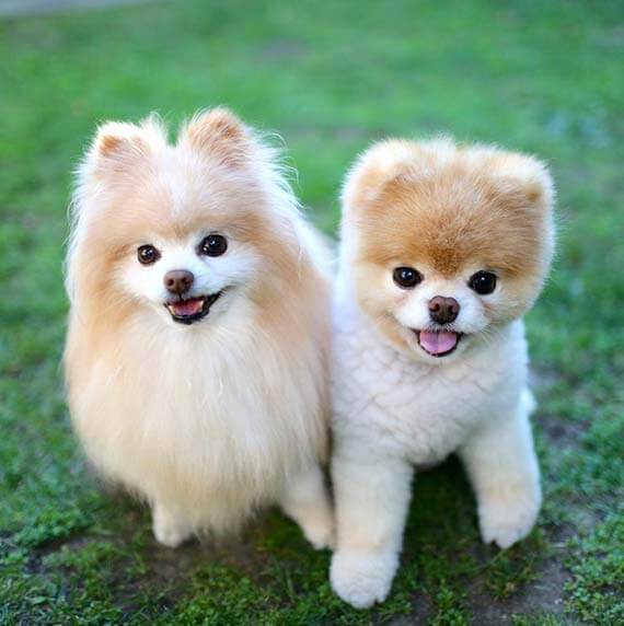 Top Barking Dogs