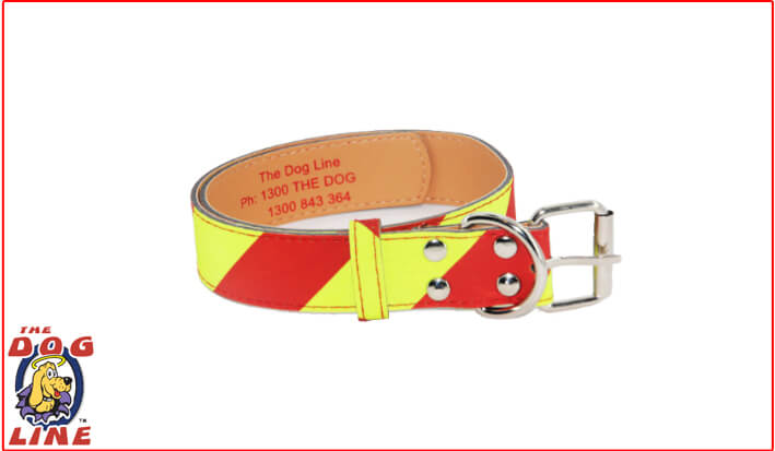 Dangerous Dog Collar for Small Dogs