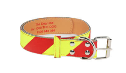 Dangerous Dog Collar for Medium Dogs