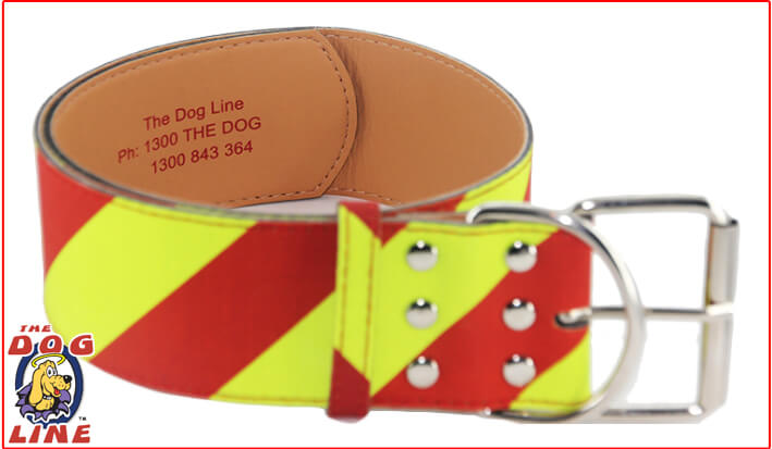 Dangerous Dog Collar