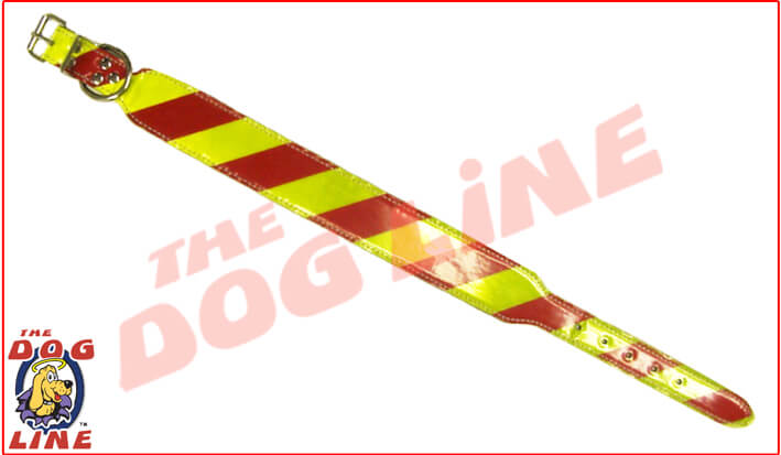 Small Dangerous Dog Collar (Run Out of Stock 50% Off)