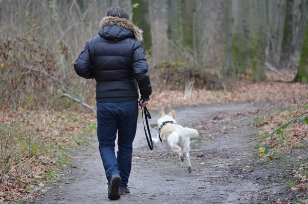 Man recalling a dog who ran off-leash