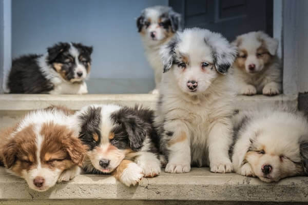 Puppies from a backyard breeder