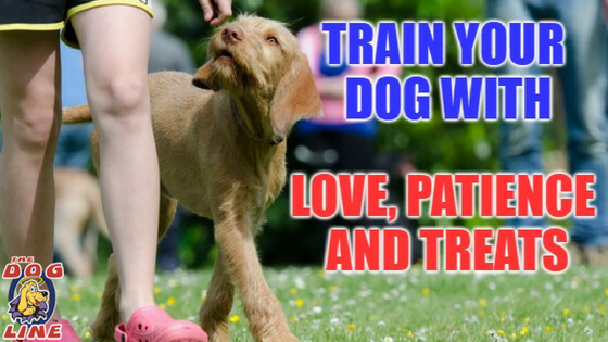 Train your dog with PetSafe's Easy Dog Training Collar