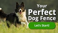 perfect dog fence
